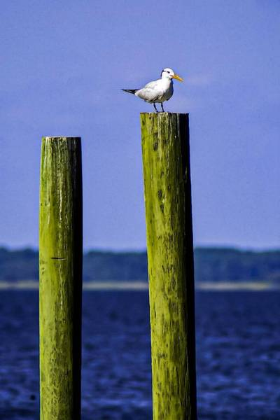 Photograph - Waiting On A Friend by Jeremy Guerin