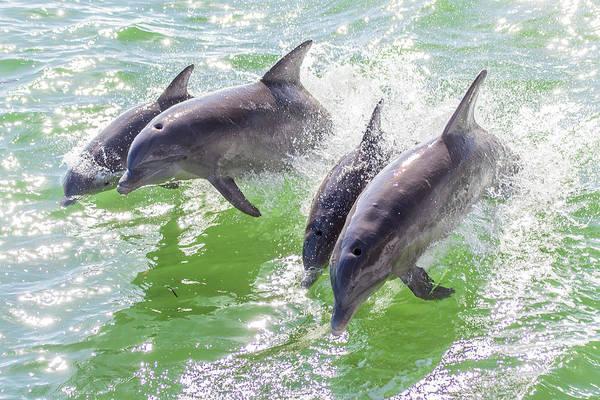 Wake Surfing Dolphin Family Art Print