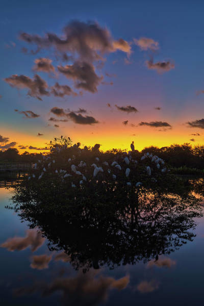 Photograph - Wakodahatchee Wetlands Sunrise And Birds by Juergen Roth