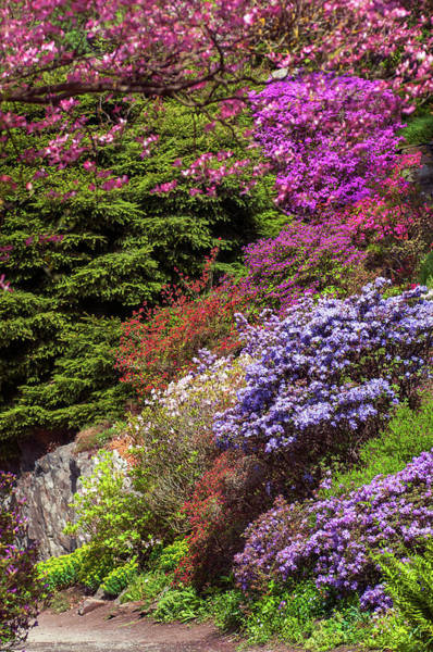 Wall Art - Photograph - Walk In Spring Eden. Alpine Blooms by Jenny Rainbow