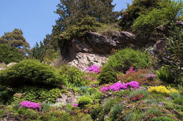 Wall Art - Photograph - Walk In Spring Eden. Alpine Garden 2 by Jenny Rainbow