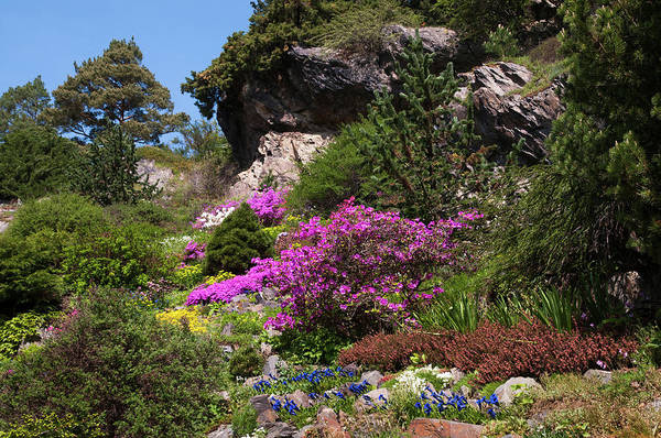 Wall Art - Photograph - Walk In Spring Eden. Alpine Garden 3 by Jenny Rainbow