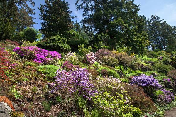 Photograph - Walk In Spring Eden. Alpine Garden 4 by Jenny Rainbow
