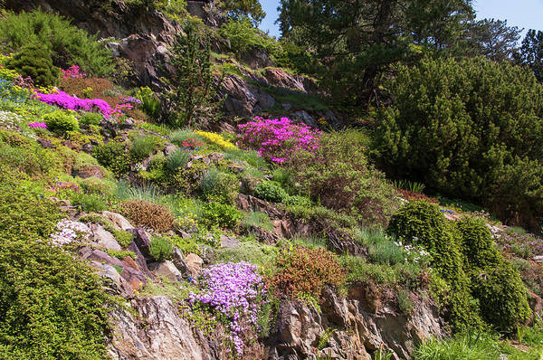 Wall Art - Photograph - Walk In Spring Eden. Alpine Garden by Jenny Rainbow