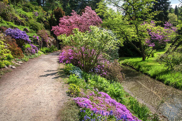 Wall Art - Photograph - Walk In Spring Eden. Colorful Path 1 by Jenny Rainbow