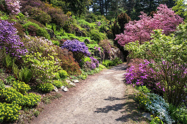Wall Art - Photograph - Walk In Spring Eden. Colorful Path 2 by Jenny Rainbow