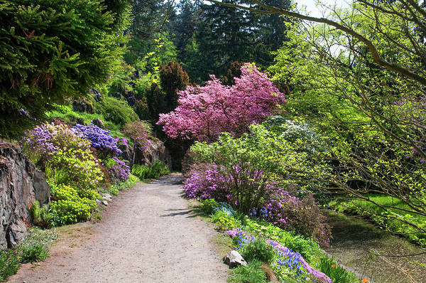 Wall Art - Photograph - Walk In Spring Eden. Colorful Path by Jenny Rainbow