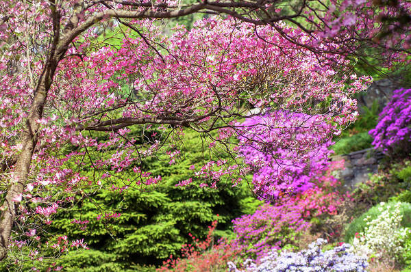 Wall Art - Photograph - Walk In Spring Eden. Pink Branch by Jenny Rainbow