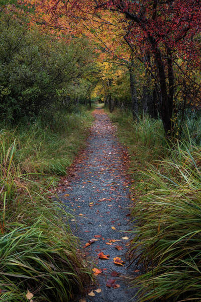 Photograph - Walk In The Rain by Darylann Leonard