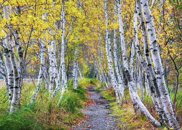 Wall Art - Photograph - Walk In The Woods by Michael Blanchette