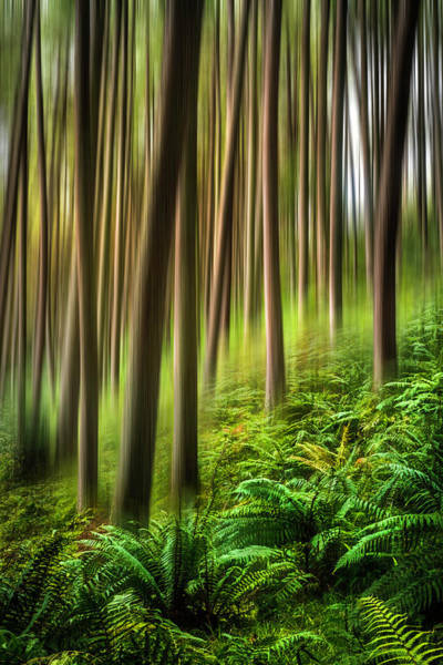 Photograph - Walk Softly In The Forest Dreamscape by Debra and Dave Vanderlaan