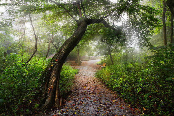 Photograph - Walk The Trail In The Early Morning Mist by Debra and Dave Vanderlaan