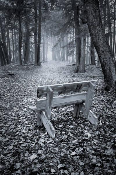 Photograph - Walk To Bench by David Heilman