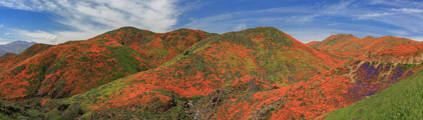 Wall Art - Photograph - Walker Canyon Poppy Panorama by Bridget Calip