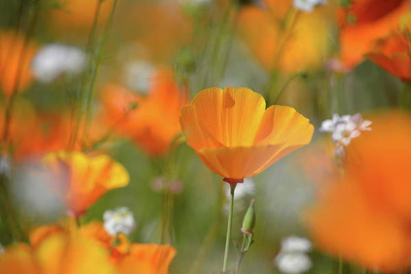Photograph - Walker Canyon Wildflowers by Kyle Hanson