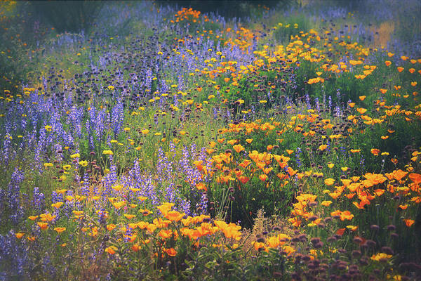 Photograph - Walking Amongst The Wildflowers  by Saija Lehtonen