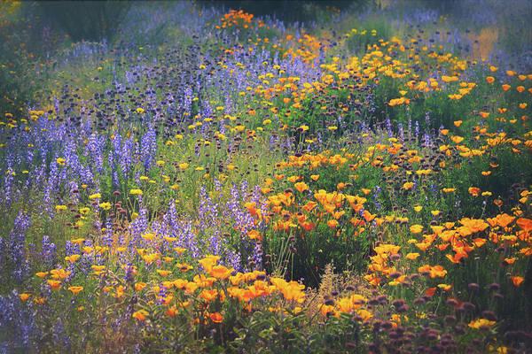 Wall Art - Photograph - Walking Amongst The Wildflowers  by Saija Lehtonen