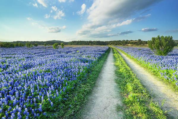 Wall Art - Photograph - Walking In A Bluebonnet Field - Texas by Ellie Teramoto