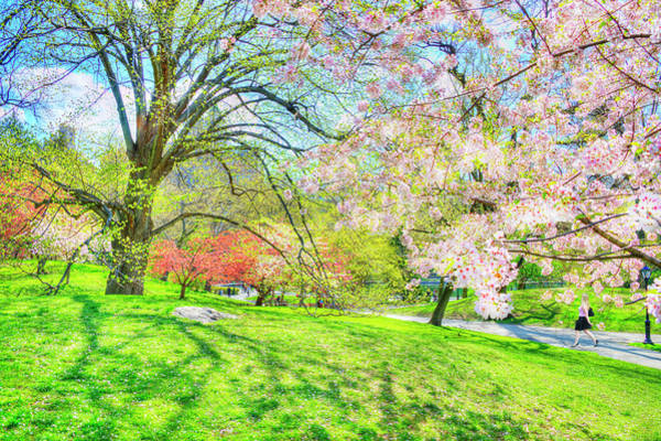 Wall Art - Photograph - Walking In Central Park In Spring by Mitchell Funk