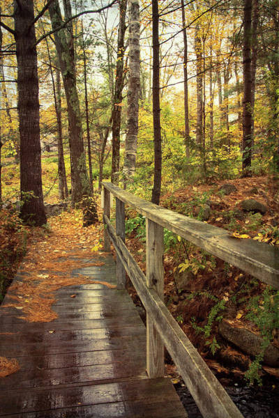 Wall Art - Photograph - Walking Path In Autumn by Joann Vitali