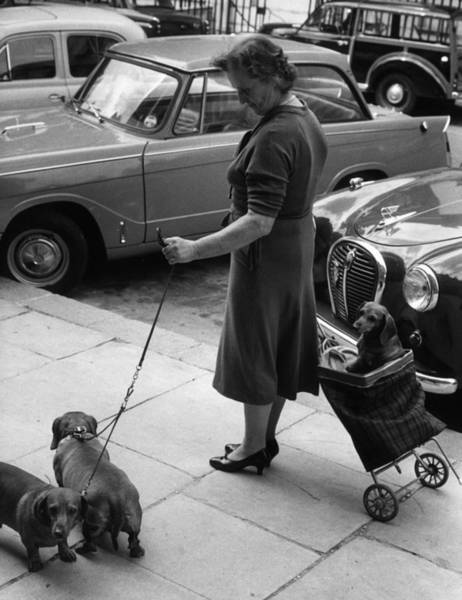 Photograph - Walking The Dogs by Erich Auerbach