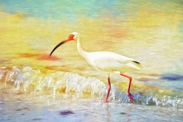 Photograph - Walking The Waves Of Sanibel by Alice Gipson