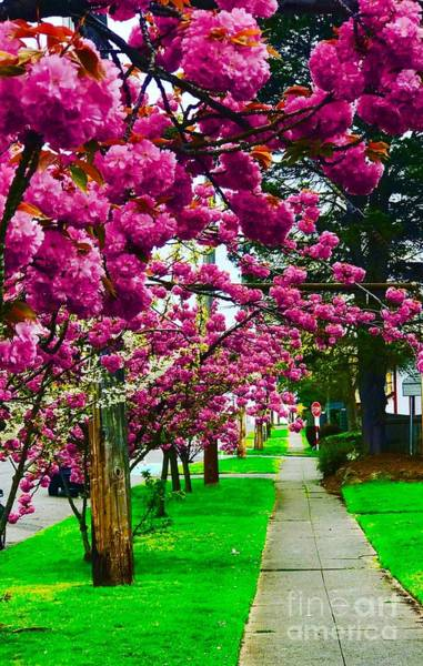 Photograph - Walking Through Blossoms by Suzanne Lorenz