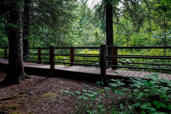 Photograph - Walking Trail Along Gooseberry River by Susan Rydberg
