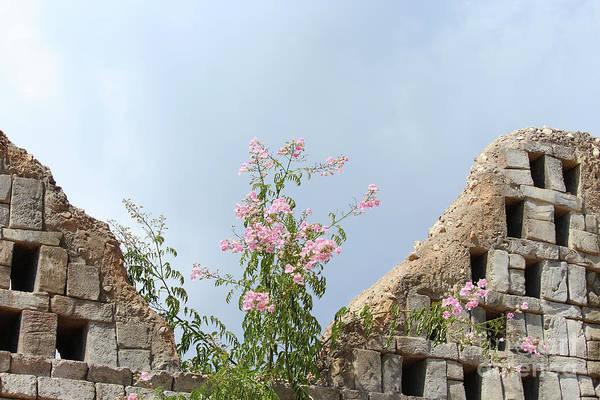 Benidorm Wall Art - Photograph - Wall Blossom by Eddie Barron