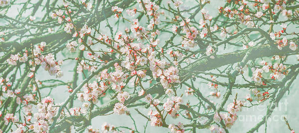 Photograph - Wallpaper With Cherry Blossom Branch In Japanese Garden In Sprin by Jelena Jovanovic