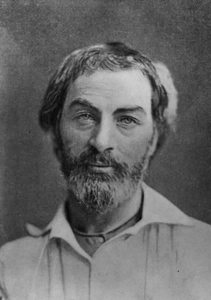 Poet Photograph - Walt Whitman by Hulton Archive