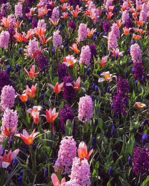 Analogous Color Photograph - Waltz Of The Flowers by An