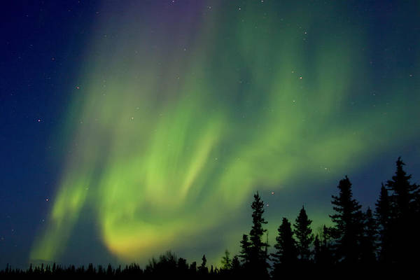 Yellowknife Wall Art - Photograph - Waltzing Aurora by Dave Brosha Photography