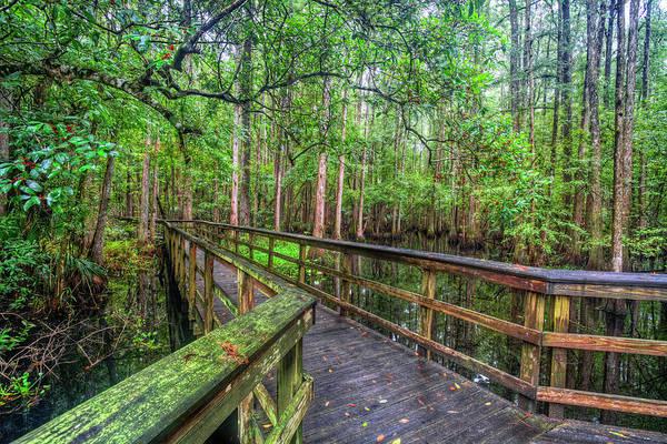 Photograph - Wander Through The Cypress by Debra and Dave Vanderlaan