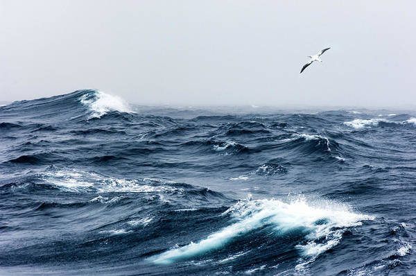 Waved Albatross Wall Art - Photograph - Wandering Albatross In Flight Over A by Mike Hill