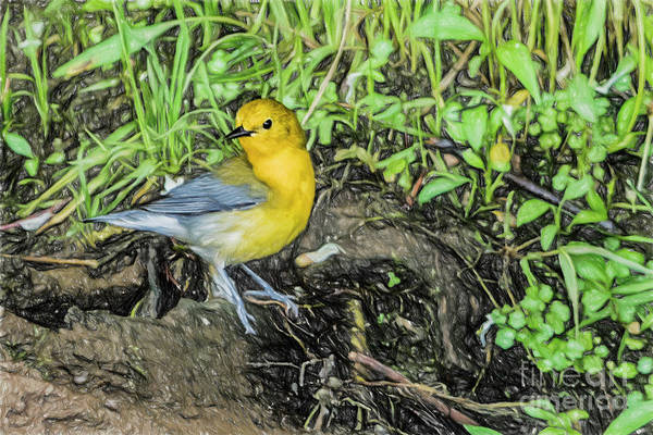 Wall Art - Digital Art - Prothonotary Warbler On Driftwood 5032tc2ticp by Doug Berry
