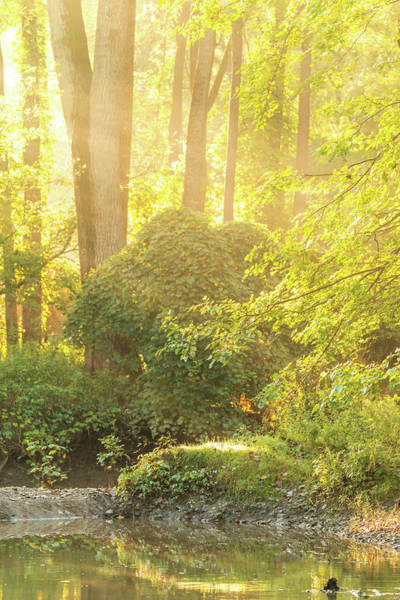 Photograph - Warm Morning Light In The Forest by Dan Sproul