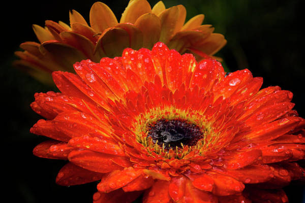 Photograph - Warm Thoughts Glowing by Susan Callaway
