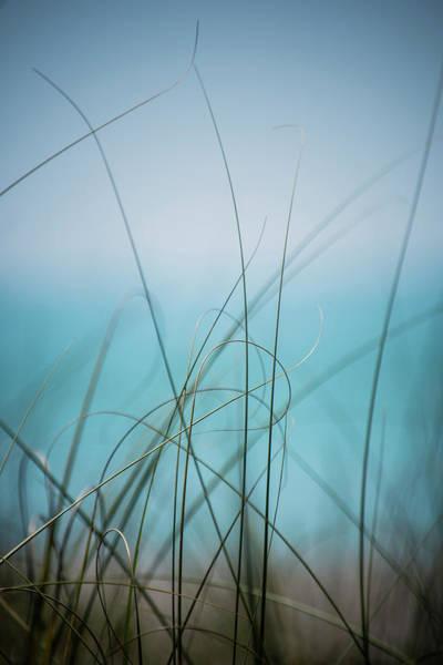 Florida Flora Photograph - Warm Wind Cool Waters by Matthew Blum