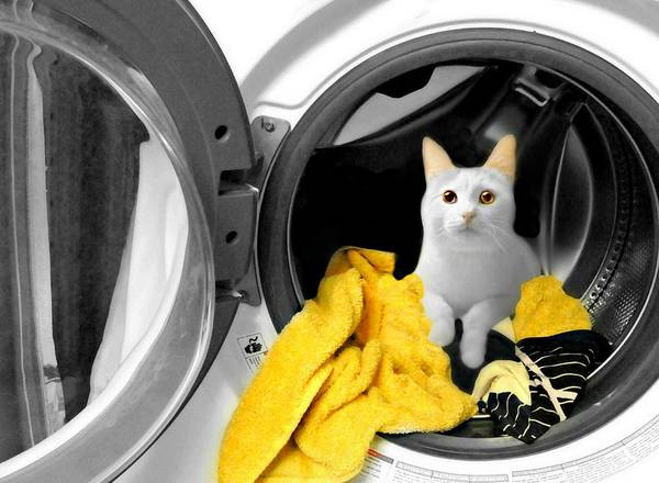 Dirty Laundry Photograph - Wash And Wear Cat by Diana Angstadt