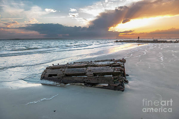 Photograph - Washed Ahore - Sullivan's Island South Carolina by Dale Powell