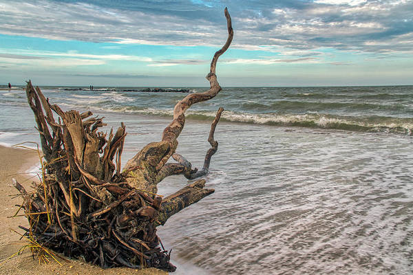 Photograph - Washed Ashore by Jerry Gammon