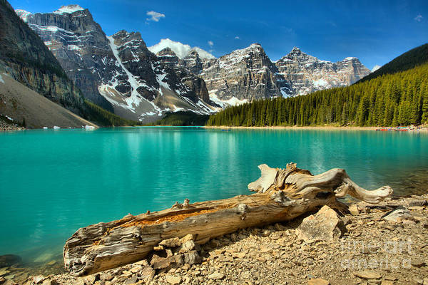 Photograph - Washed Up At Moraine Lake by Adam Jewell