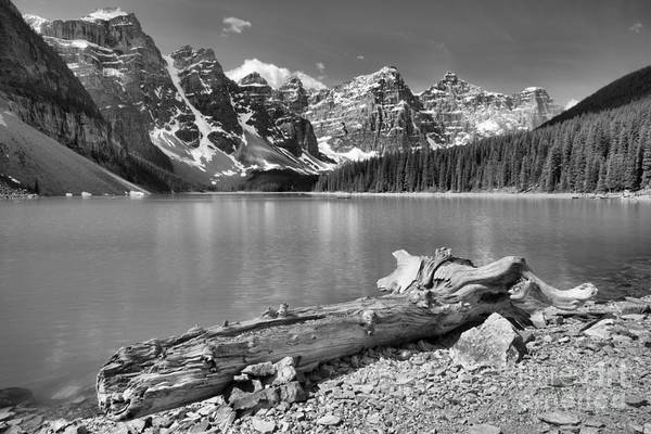 Photograph - Washed Up At Moraine Lake Black And White by Adam Jewell