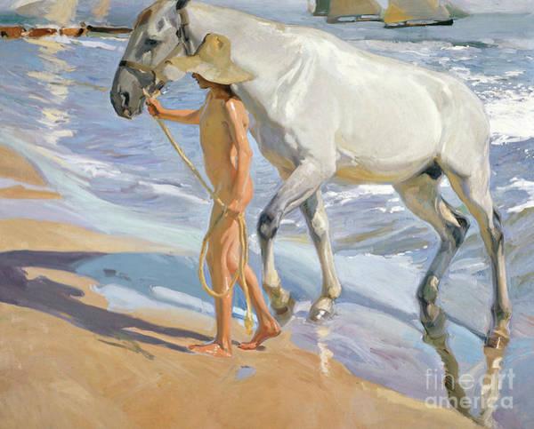 Beachy Painting - Washing The Horse, 1909 by Joaquin Sorolla y Bastida
