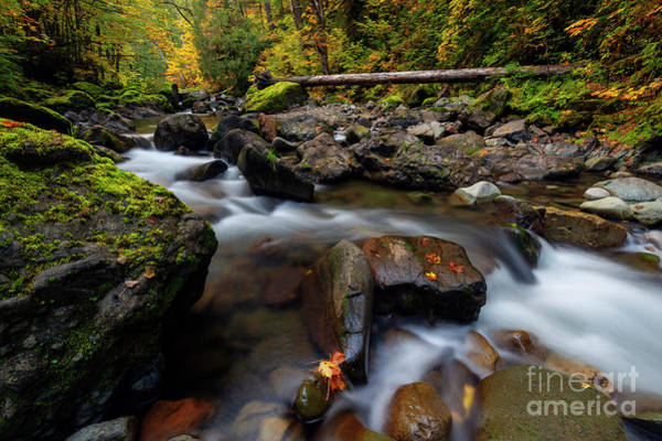 Wall Art - Photograph - Washington Cascade Autumn by Mike Dawson