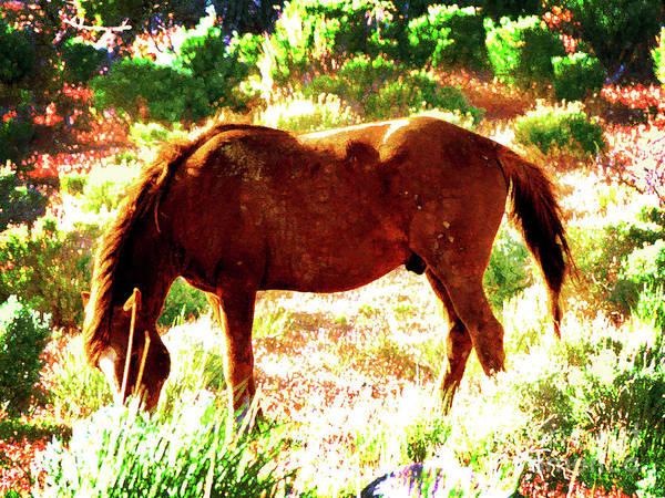 Wall Art - Photograph - Washoe Wild Horse by Robert Ball
