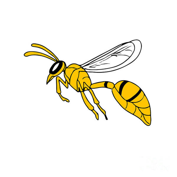 Wall Art - Digital Art - Wasp Flying Drawing by Aloysius Patrimonio