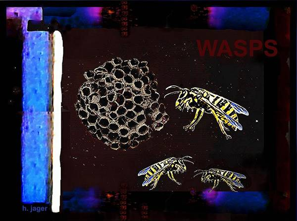 Photograph - Wasps by Hartmut Jager