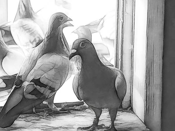 Photograph - Watchful Homing Pigeons Sketch by Don Northup